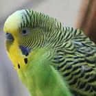 Otras aves