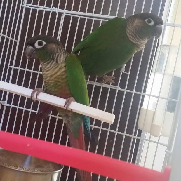 Chano y Chana